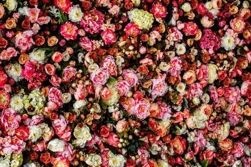 Εικόνα κινηματογραφήσεων σε πρώτο πλάνο του όμορφου υποβάθρου τοίχων λουλουδιών στοκ εικόνα με δικαίωμα ελεύθερης χρήσης