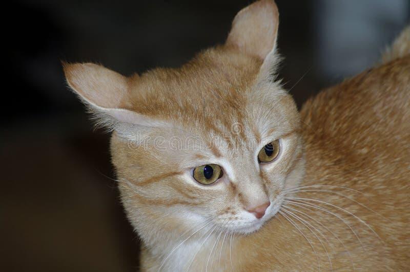 Εικόνα με την όμορφη κόκκινη γάτα στοκ εικόνες με δικαίωμα ελεύθερης χρήσης