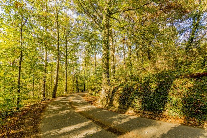 Εικόνα μιας διάβασης μέσω του δάσους σε μια όμορφη ημέρα φθινοπώρου στοκ εικόνα