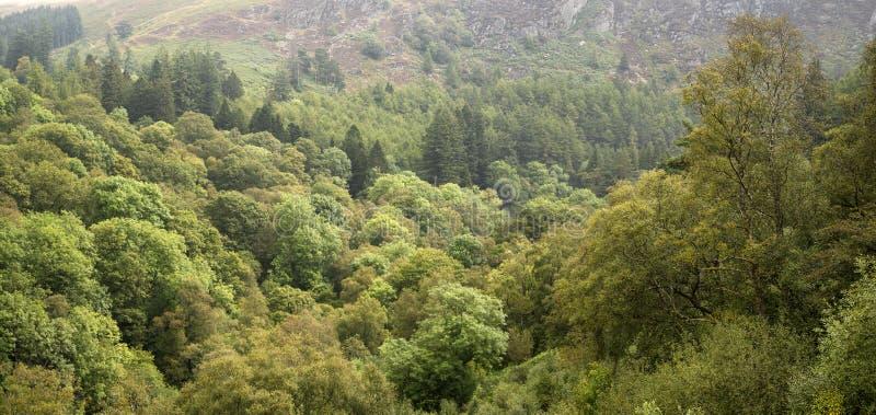 Εικόνα πανοράματος τοπίων του πολύβλαστου πράσινου δάσους το καλοκαίρι με mou στοκ εικόνα με δικαίωμα ελεύθερης χρήσης