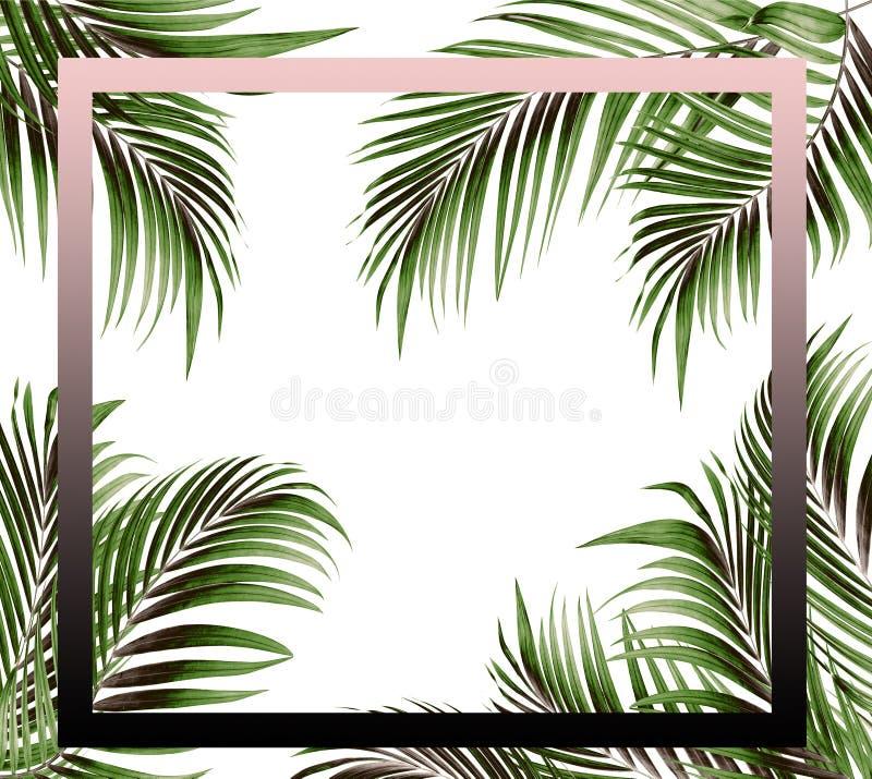 Εικόνα πλαισίων με το πράσινο φύλλο του υποβάθρου φοινίκων απεικόνιση αποθεμάτων