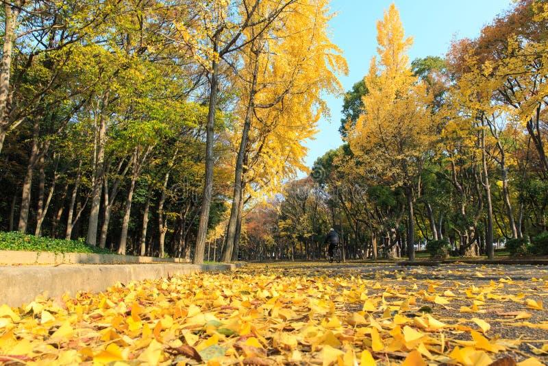 Εικόνα της περιοχής στο κάστρο της Οζάκα, Οζάκα, Ιαπωνία στο φθινόπωρο στοκ φωτογραφία με δικαίωμα ελεύθερης χρήσης