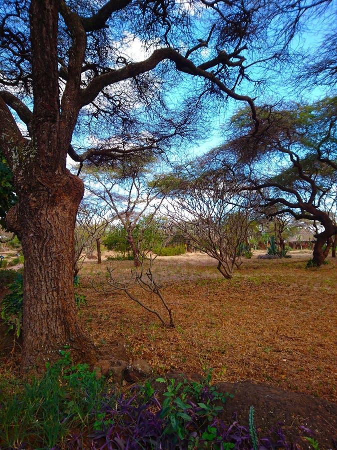 Εικόνα τοπίων για τη χρήση υποβάθρου στοκ φωτογραφία με δικαίωμα ελεύθερης χρήσης