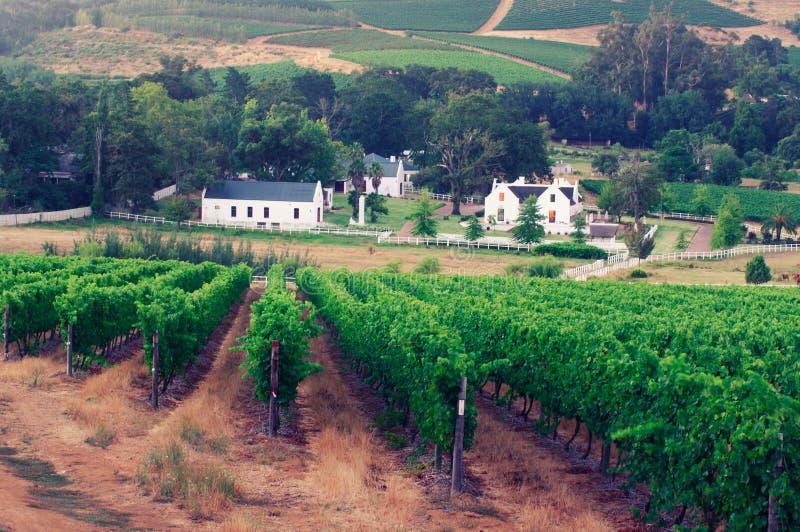 Εικόνα τοπίων ενός αμπελώνα, Stellenbosch, Νότια Αφρική. στοκ φωτογραφίες με δικαίωμα ελεύθερης χρήσης