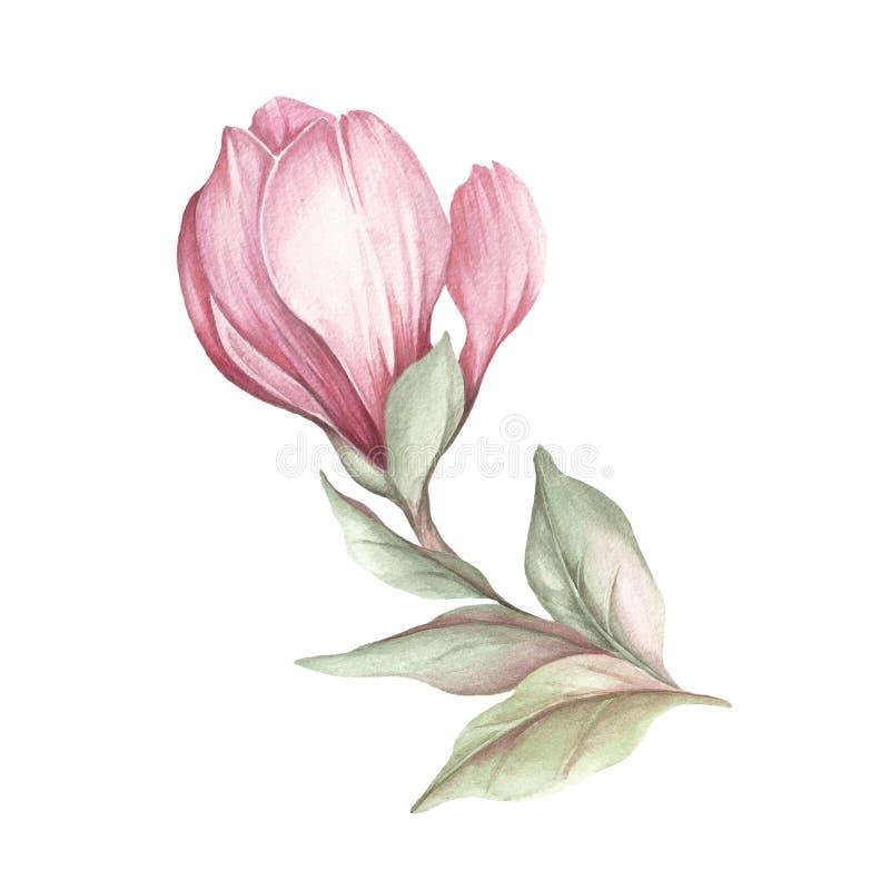Εικόνα του ανθίζοντας κλάδου magnolia η διακοσμητική εικόνα απεικόνισης πετάγματος ραμφών το κομμάτι εγγράφου της καταπίνει το wa διανυσματική απεικόνιση