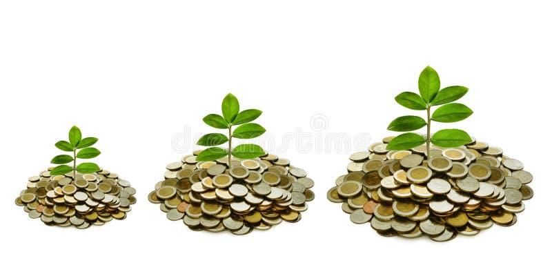 Εικόνα του βήματος του σωρού των νομισμάτων με τις εγκαταστάσεις στην κορυφή για την επιχείρηση, αποταμίευση, αύξηση, οικονομική  στοκ εικόνα