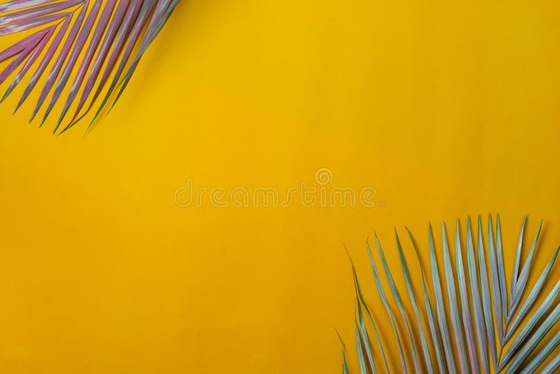 Εικόνα του πίνακα επάνω όψης της έννοιας του φόντου των θερινών διακοπών Επίπεδη κοκοφοίνικα ή φύλλο φοίνικα σε μοντέρνο rustic y στοκ φωτογραφίες