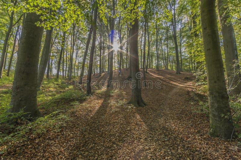 Εικόνα των ακτίνων ήλιων που λάμπουν μέσω των δασικών δέντρων στοκ εικόνα με δικαίωμα ελεύθερης χρήσης