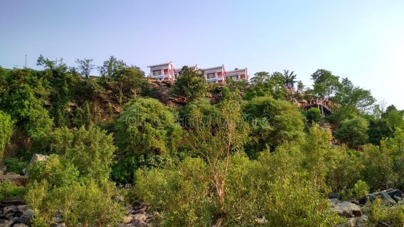 Εικόνα των εγκαταστάσεων και των δέντρων, τα βλέμματά του όμορφα στοκ φωτογραφίες με δικαίωμα ελεύθερης χρήσης