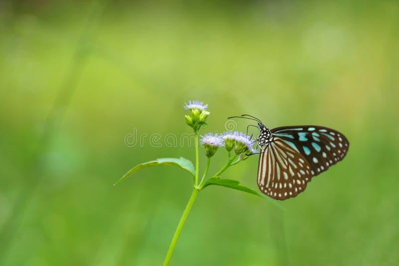 Εικόνα υποβάθρου πεταλούδων στοκ φωτογραφία με δικαίωμα ελεύθερης χρήσης