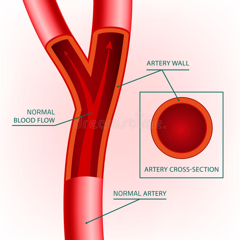 Εικόνα φλεβών αίματος διανυσματική απεικόνιση