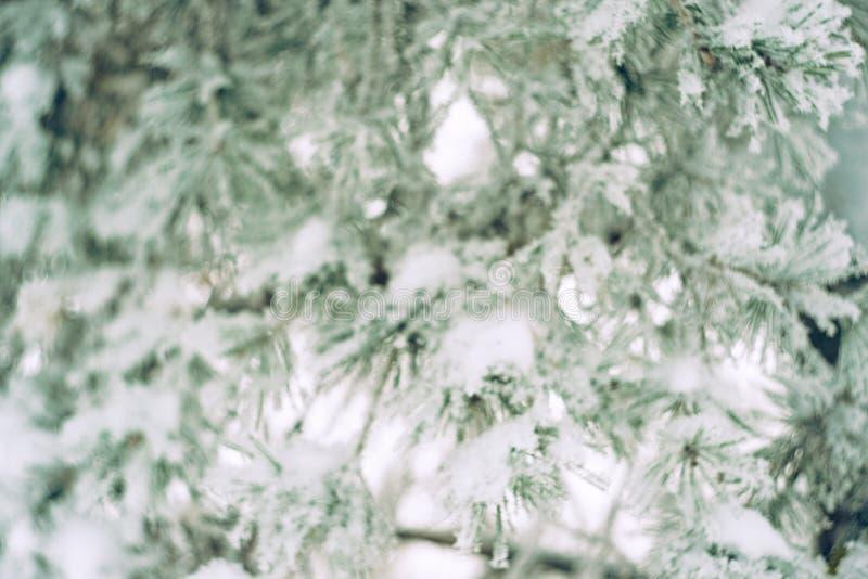 Εικόνα Defocused του κλάδου δέντρων πεύκων στο χιόνι Θολωμένο όμορφο υπόβαθρο χειμερινής φύσης στοκ εικόνες