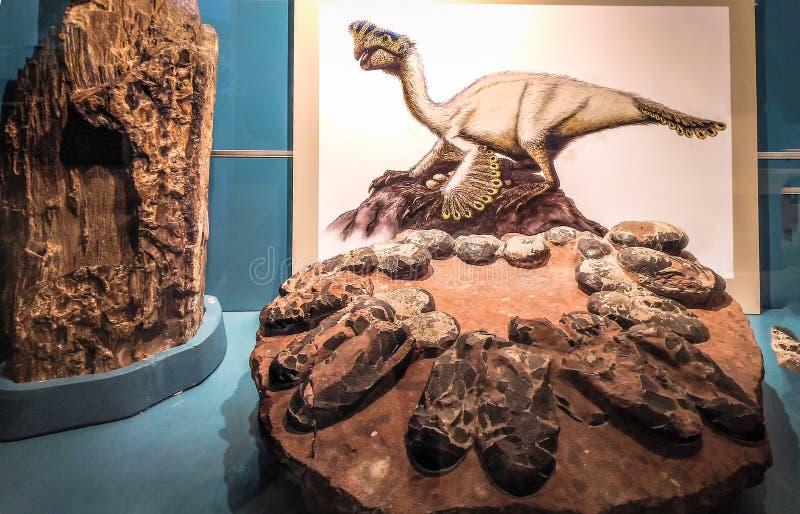 Εικόνα Orviraptor και της φωλιάς του δεινοσαύρου στοκ εικόνες