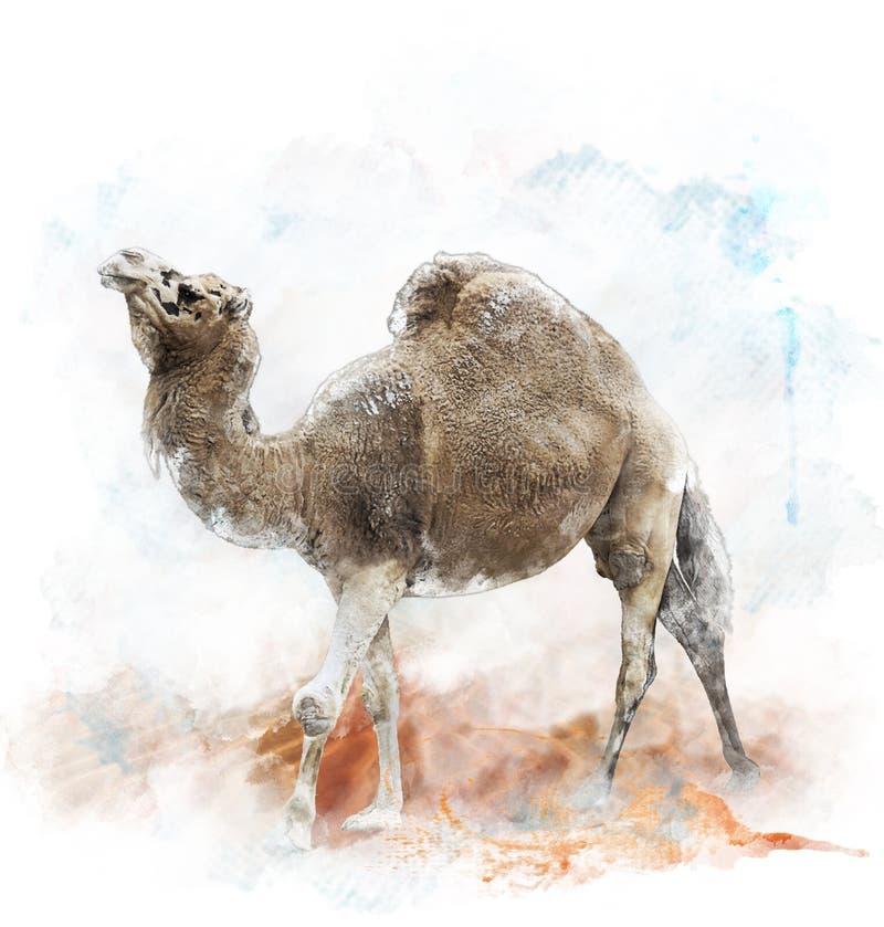 Εικόνα Watercolor της καμήλας ενιαίος-Humped διανυσματική απεικόνιση