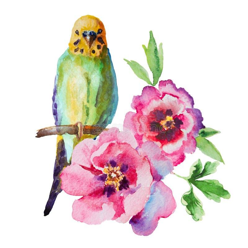 Εικόνα Watercolor του budgie με τα λουλούδια στο άσπρο υπόβαθρο στοκ φωτογραφίες