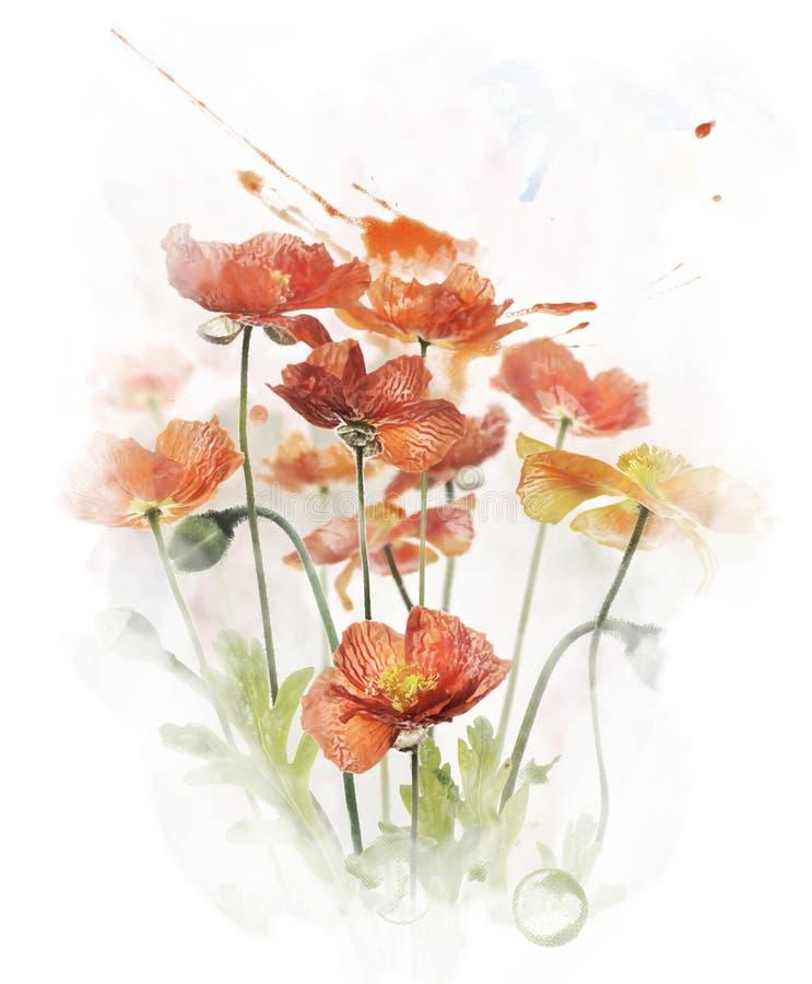 Εικόνα Watercolor των κόκκινων λουλουδιών παπαρουνών διανυσματική απεικόνιση