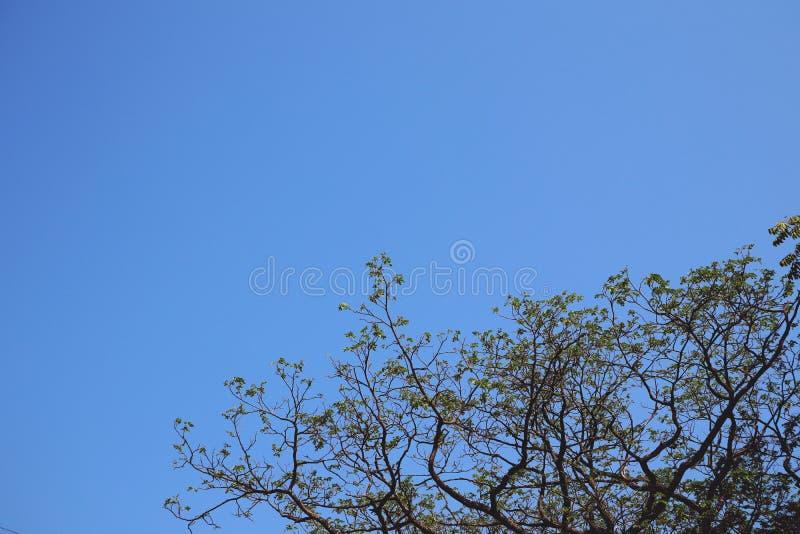 Εικόνες για τα αφηρημένους υπόβαθρα, τα δέντρα, τα φύλλα και τους ουρανούς Όμορφα φυσικά χρώματα στοκ εικόνες