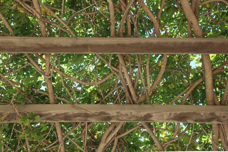 Ειρηνική σκιά σε Ojai, πάρκο Καλιφόρνιας στοκ εικόνες