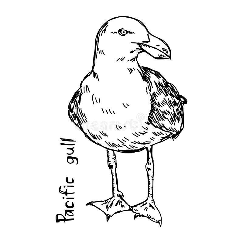 Ειρηνικός γλάρος - διανυσματικό χέρι σκίτσων απεικόνισης που σύρεται διανυσματική απεικόνιση