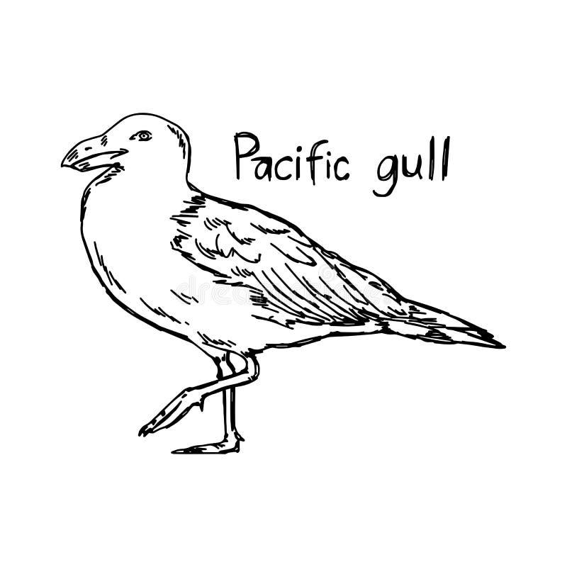 Ειρηνικός γλάρος - διανυσματικό χέρι σκίτσων απεικόνισης που σύρεται ελεύθερη απεικόνιση δικαιώματος