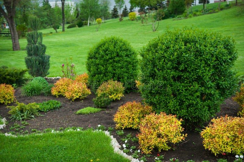 Ειρηνικός κήπος με έναν πρόσφατα κομμένο χορτοτάπητα στοκ φωτογραφίες με δικαίωμα ελεύθερης χρήσης