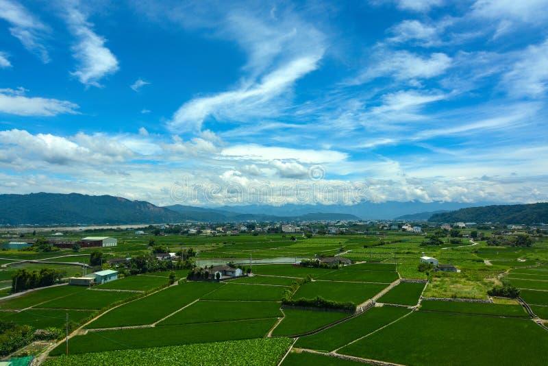 Ειρηνικό καλλιεργήσιμο έδαφος για τους ορυζώνες ρυζιού και λωτός που καλλιεργεί κάτω από έναν θερινό ουρανό στη κομητεία Yunlin,  στοκ εικόνα με δικαίωμα ελεύθερης χρήσης