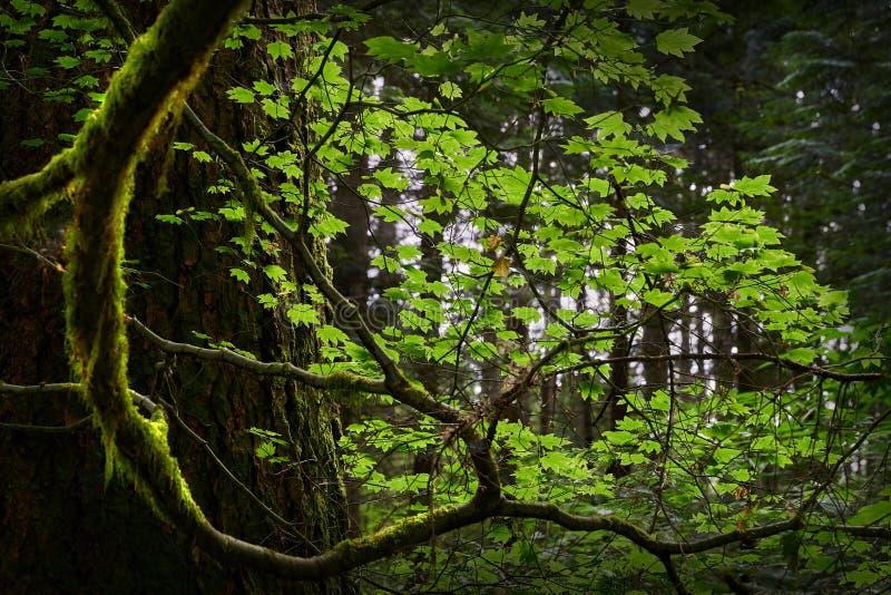 Ειρηνικό πάρκο πνευμάτων, Βανκούβερ στοκ φωτογραφίες με δικαίωμα ελεύθερης χρήσης