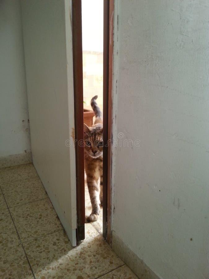 Εισβολέας γατών στοκ φωτογραφίες με δικαίωμα ελεύθερης χρήσης