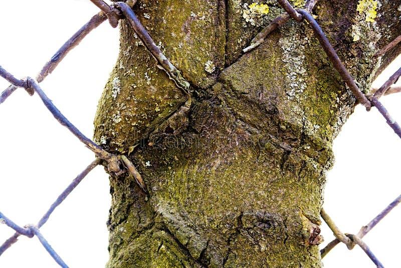 εισερχόμενο δέντρο στοκ εικόνες