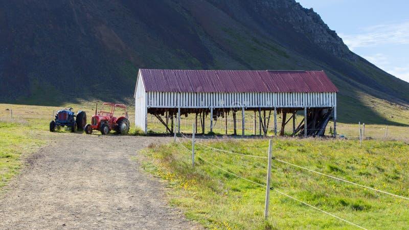 Ειδικότητα της Ισλανδίας αποκαλούμενη hakarl στοκ φωτογραφίες