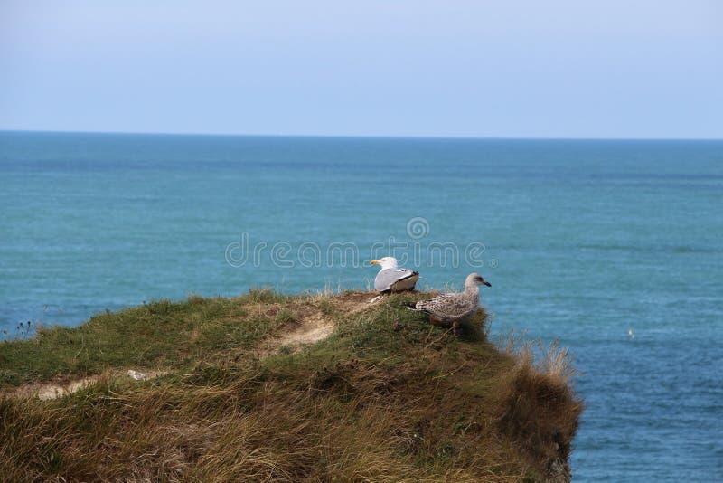 Εκείνο το seagull εξετάζει ακόμα την απόσταση και βλέπει την κατεύθυνση των τροφίμων στοκ εικόνα με δικαίωμα ελεύθερης χρήσης