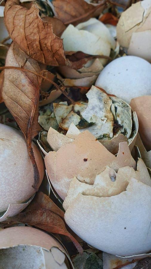 Εκκολάπτοντας αυγά στη φωλιά στοκ φωτογραφία με δικαίωμα ελεύθερης χρήσης