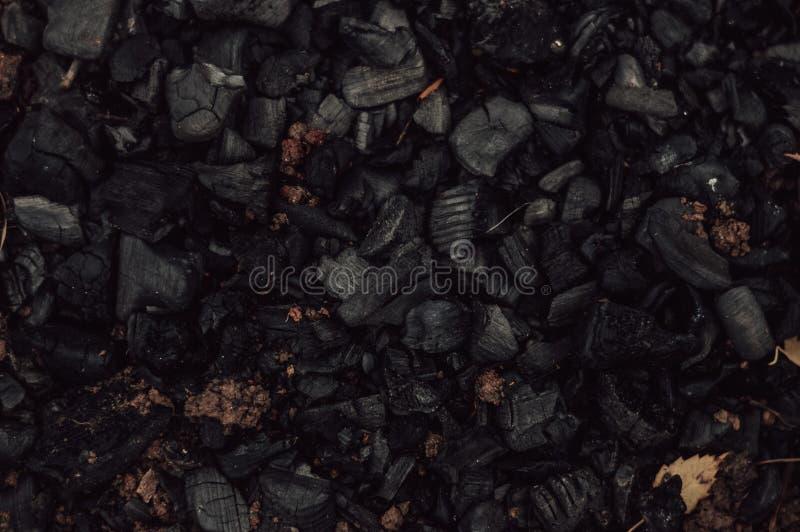 Εκλείψας άνθρακας του ξύλου στοκ εικόνα