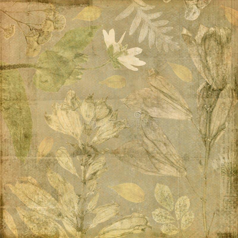 Εκλεκτής ποιότητας παλαιό βοτανικό floral υπόβαθρο εγγράφου κολάζ διανυσματική απεικόνιση