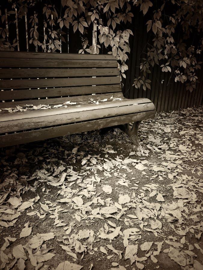 Εκλεκτής ποιότητας τονισμένη σέπια εικόνα ύφους του πάγκου στο πάρκο φθινοπώρου στοκ εικόνες με δικαίωμα ελεύθερης χρήσης
