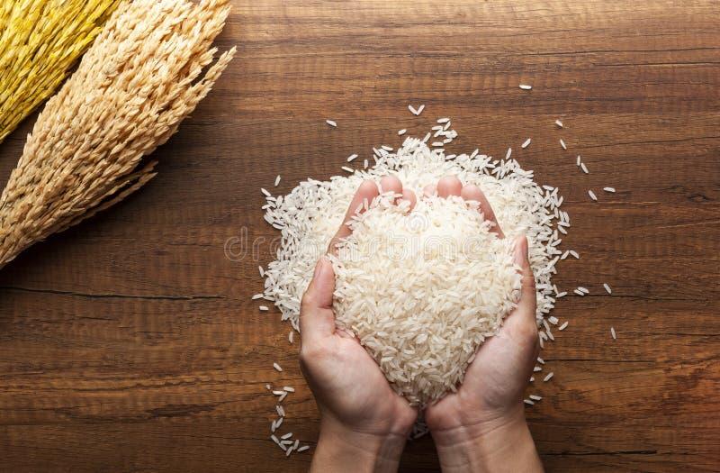 Εκμετάλλευση ρυζιού της Jasmine στα χέρια στοκ εικόνες με δικαίωμα ελεύθερης χρήσης