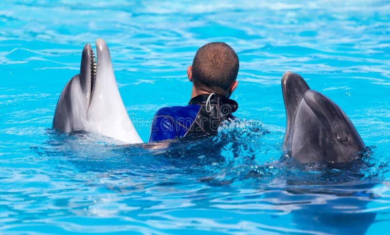 Εκπαιδευτής με δύο δελφίνια σε μια λίμνη στοκ εικόνες με δικαίωμα ελεύθερης χρήσης