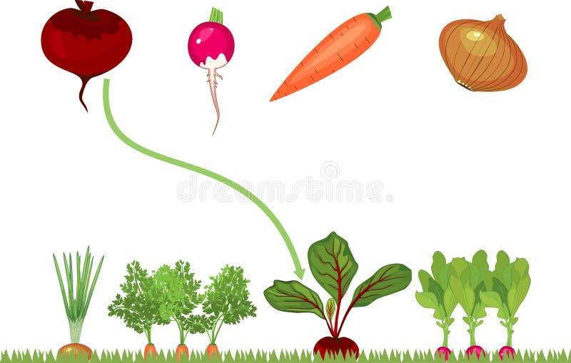 Εκπαιδευτικά παιδιά που ταιριάζουν με το παιχνίδι για τα παιδιά Λαχανικά στο φυτικό μπάλωμα ελεύθερη απεικόνιση δικαιώματος