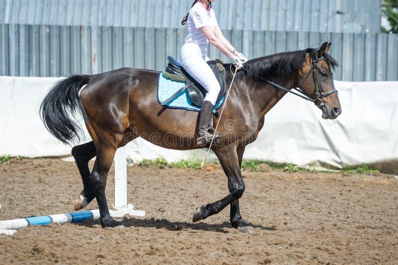Εκπαιδευτικός στην ιππασία, βαθμολογία εισαγωγής Cavaletti σε ένα τρέξιμο στοκ φωτογραφία με δικαίωμα ελεύθερης χρήσης