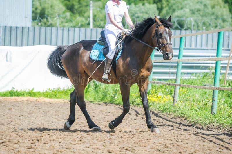 Εκπαιδευτικός στην ιππασία, βαθμολογία εισαγωγής Cavaletti σε ένα τρέξιμο στοκ εικόνα με δικαίωμα ελεύθερης χρήσης