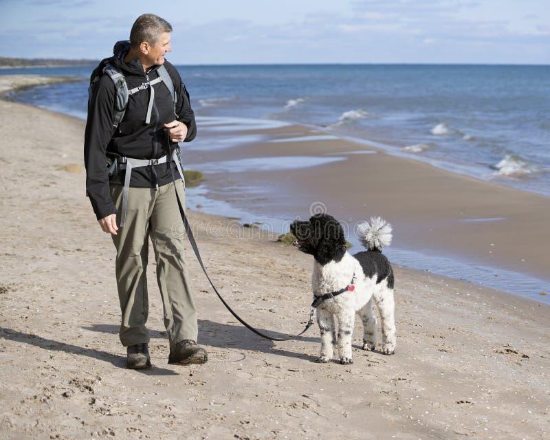 Εκπαιδευτής σκυλιών στην παραλία στοκ εικόνες