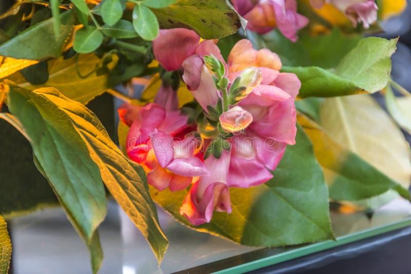 Εκπληκτικά όμορφα λουλούδια στοκ εικόνες