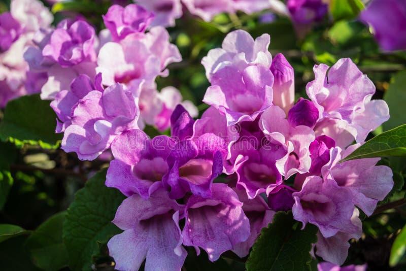 Εκπομπή της άνθισης λουλουδιών στοκ εικόνα