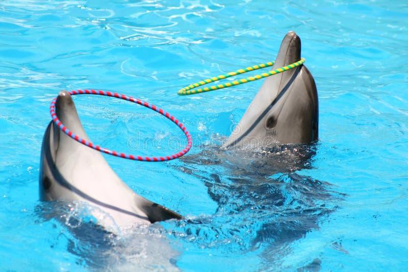 εκτέλεση δελφινιών στοκ εικόνες με δικαίωμα ελεύθερης χρήσης