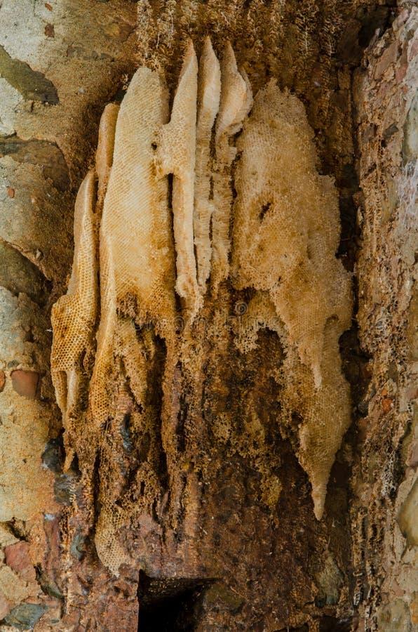 Εκτεθειμένη κυψέλη μελισσών στο τουβλότοιχο στοκ φωτογραφίες με δικαίωμα ελεύθερης χρήσης