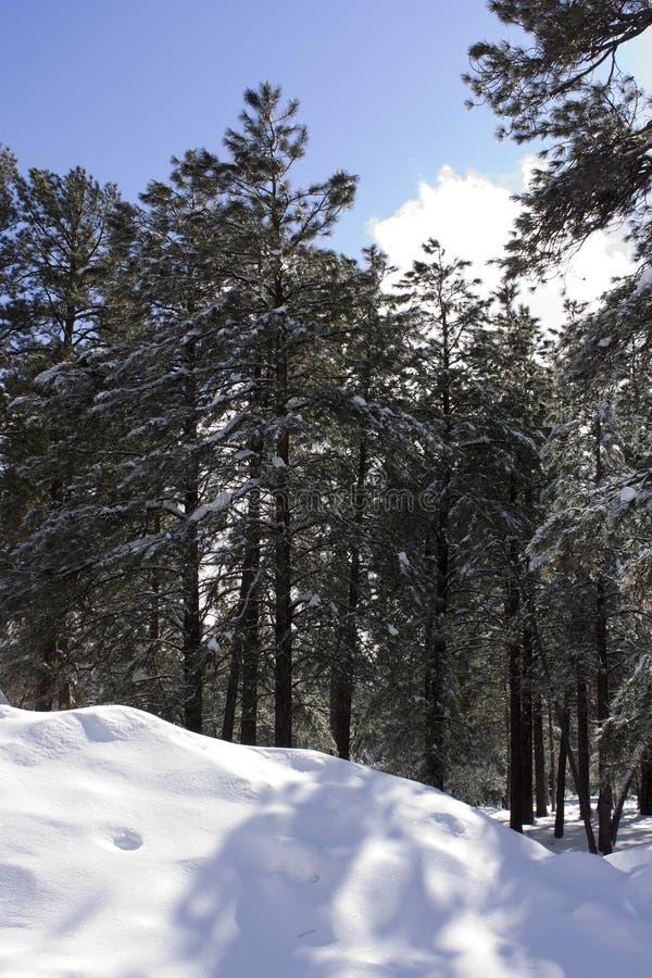 εκτυφλωτικός χειμώνας ή&lambd Στοκ Εικόνες
