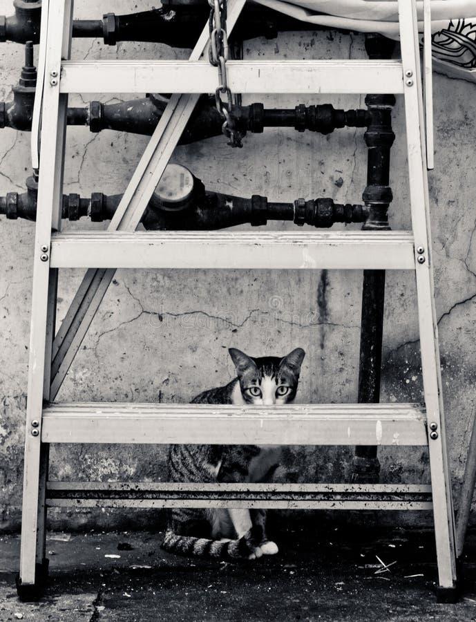 Εκφοβίστε το κρύψιμο γατών πίσω από μια σκάλα στοκ φωτογραφίες με δικαίωμα ελεύθερης χρήσης