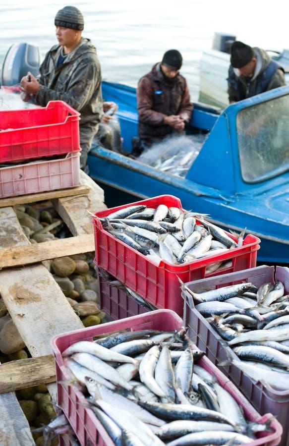 εκφόρτωση ψαριών στοκ φωτογραφίες
