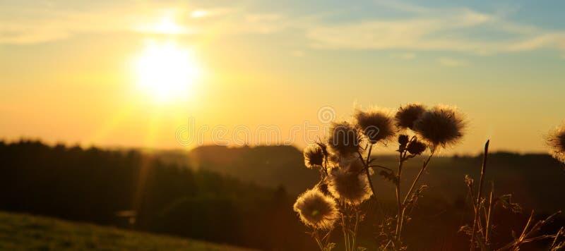 Εκλεκτής ποιότητας εγκαταστάσεις χλόης στο θερινό ηλιοβασίλεμα στοκ φωτογραφία με δικαίωμα ελεύθερης χρήσης