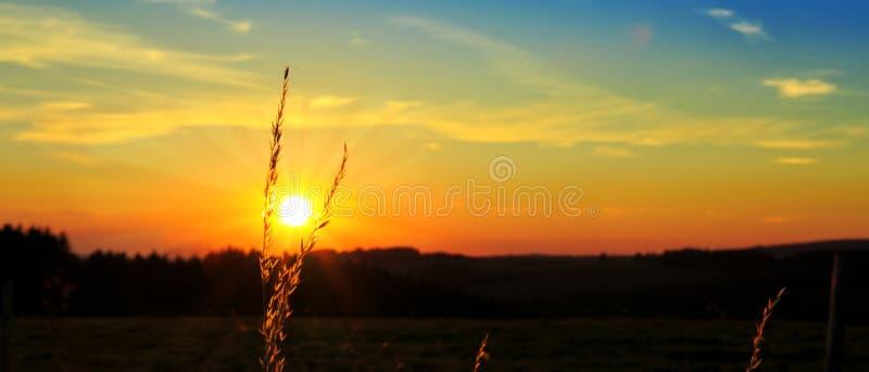 Εκλεκτής ποιότητας εγκαταστάσεις χλόης στο θερινό ηλιοβασίλεμα στοκ εικόνες με δικαίωμα ελεύθερης χρήσης